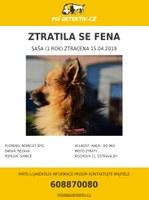 Pomozte najít ztraceného psa