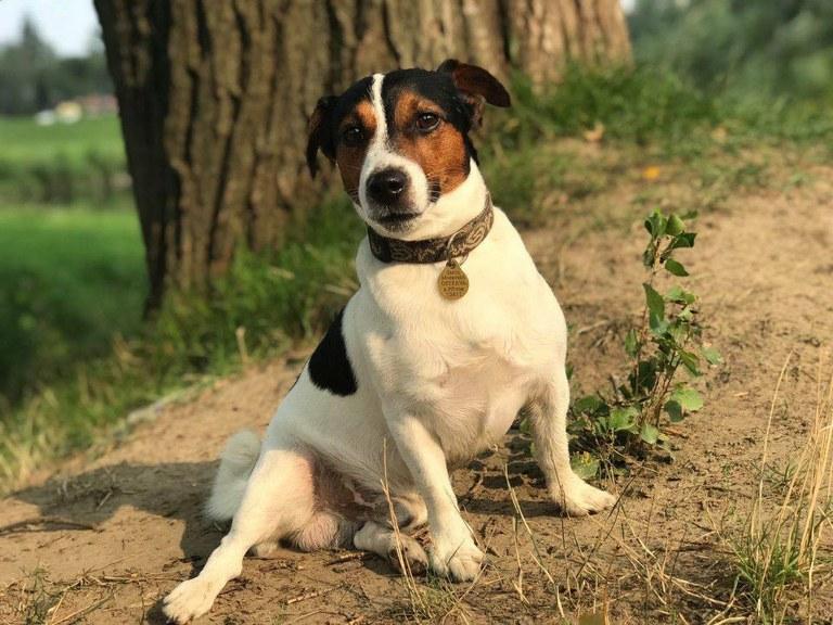 Upozornění chovatelům psů